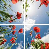 FOTOPRINT afbeelding klaproos verdeeld over 4 panelen 595 x 595 mm F60KLAPROOS-4