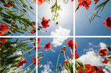 FOTOPRINT afbeelding klaproos verdeeld over 6 panelen 595 x 595 mm F60KLAPROOS-6