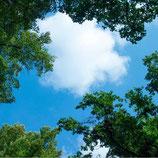 FOTOPRINT afbeelding wolk-bos verdeeld over 1 paneel 595 x 595 mm F60WOLK-BOS1