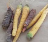 Karotten bunt