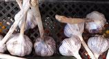 Knoblauch Stk