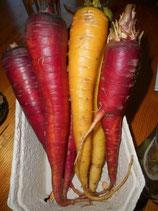 Bio-Karotten bunt