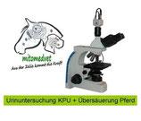 Urintest Kombi: KPU und Gewebeübersäuerung  Pferd