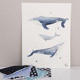 Aquarellbild Walfamilie
