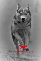Meet and Go mit verhaltenskreativem Hund