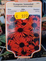 Echinacea - Sondersorten