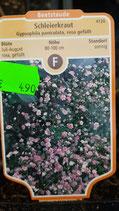 Schleierkraut rosa gefüllt 80 - 100 cm