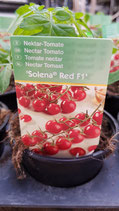 Tomate Solana Red