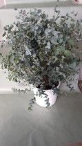 Eucalyptus-Busch groß