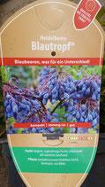 """Heidelbeere-Rarität """"Blautropf"""""""