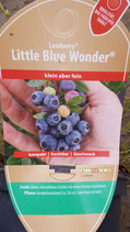 "Heidelbeere ""Little Blue Wonder"""