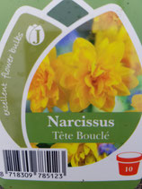 Mininarzisse 'Tete Boucle' (gefüllte Blüte)