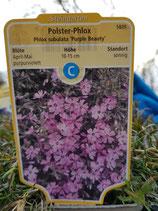 Polsterphlox 'Purple Beauty'