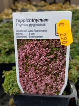 Feldthymian lila und weiß