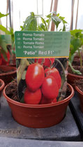 Roma-Tomate Patia Red
