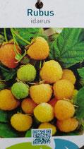 """Gelbe Herbsthimbeere """"Golden Everest"""""""