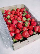 ※春限定~【無選別】畑収穫そのままイチゴ箱