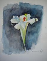 Lilie vor dunklem Hintergrund