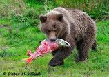 Rindfleischwurst Natura Dog, Alaska Wildlachs aus Nachhaltigem Fang & Pferdefleisch