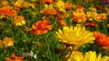 Ringelblumen-Fußcreme 100ml