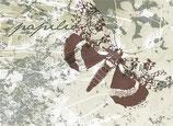 Papilio groß