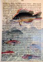 """""""LostPaper"""" - Fische II - Briefkarte (m. Umschlag)"""