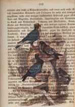 """""""LostPaper"""" - Vögel I - Briefkarte (m. Umschlag)"""