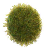 """Magnet-Knopf mit 1 Magnet auf der Rückseite und """"Gras""""-Folie"""