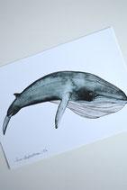 Print Bryde Whale A5
