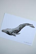 Print Grey Whale A5