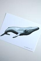 Print Blue Whale A5