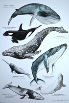 A Whale Poster A4