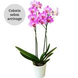 Orchidée 2 tiges avec cache pot céramique