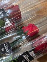 Rose éternelle à la tige, coloris au choix