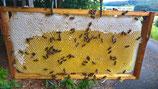Honigverkostung mit 3-Gänge-Honig-Menü