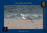 Holzpostkarte: List Vogel