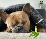 Hundemassage mit ätherischen Ölen