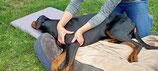 Kombi-Seminar: Klassische Massage am Hund
