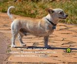 Hunde mit Handicap - 02. 10. 2021