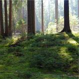 Wald nah