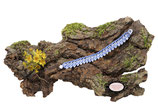 Bracelet au crochet Aerin simple rang, coton  bleu et Rocailles de Bohème blanches