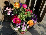 12 gemischte Frühlingsblüher in einer Palette