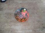 Kürbis / Hokkaido Orange