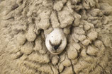 Texelse schapenwol/Wandelwol
