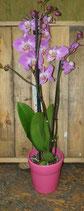 Orchidee im Keramiktopf