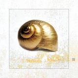 Gold-Schnecke III