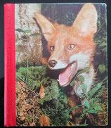 Die schönsten Tiergeschichten der Welt - Band 1
