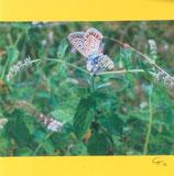 Fotokarten mittelgross mit Umschlag