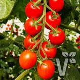 Tomate Bolstar Baloe