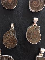 Ammoniten nr.9